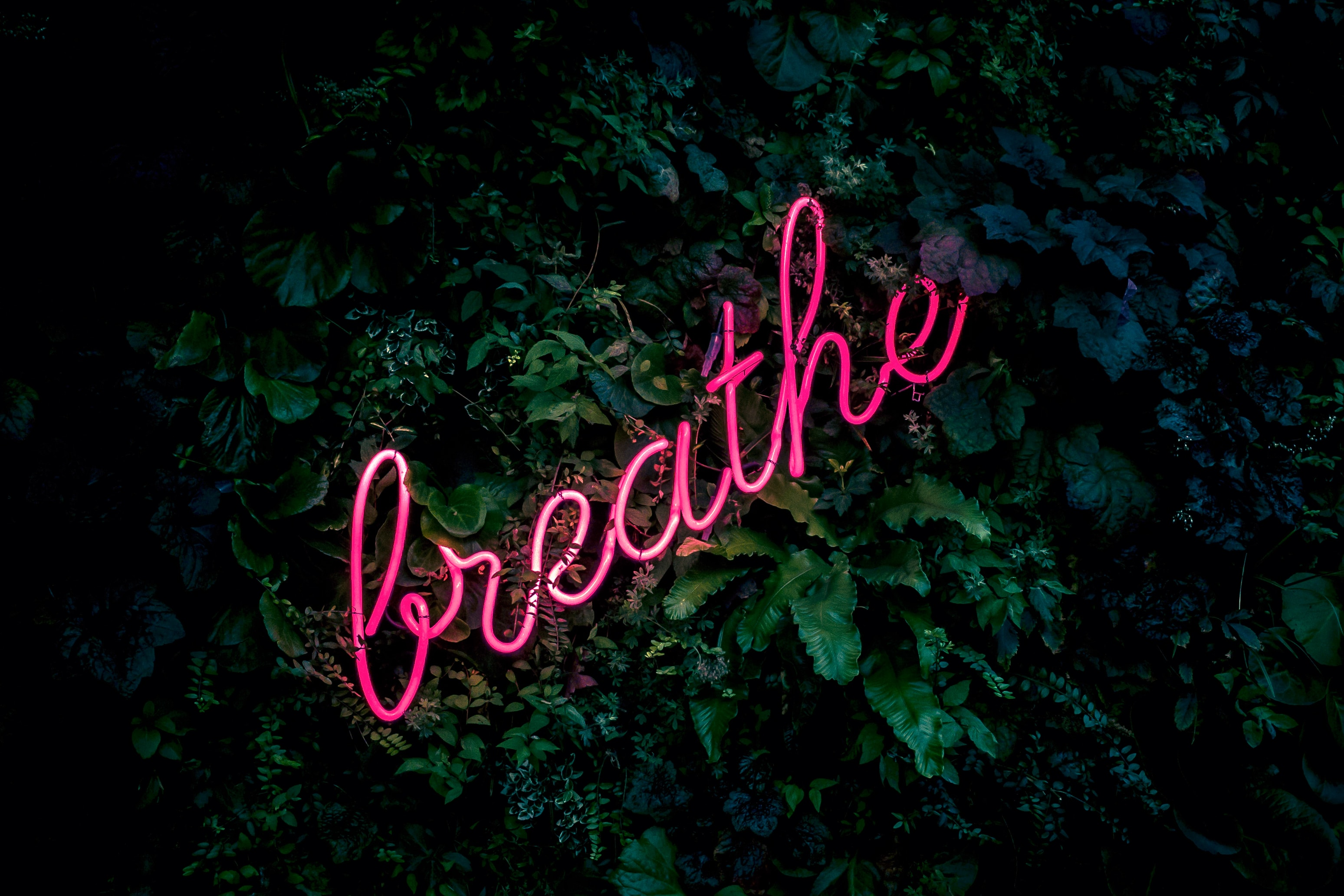 Breathe Neon Text in Green Plants